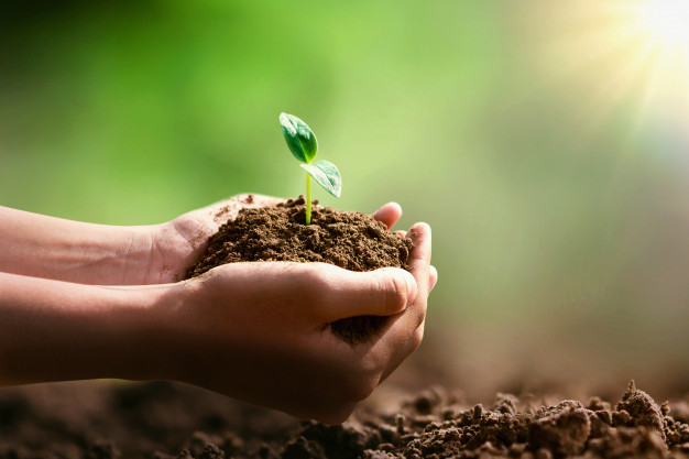 hand holding small tree planting sunshine eco concept 34152 1139